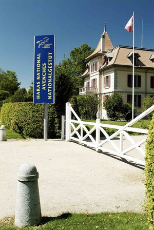 Haras national suisse, M. Rindlisbacher